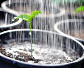 Plants & Gardens watering   House Solutions