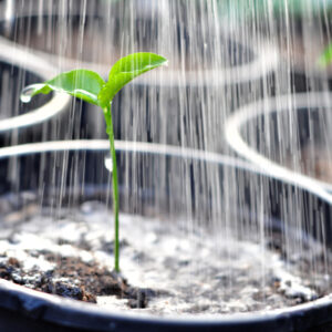 Plants & Gardens watering | House Solutions